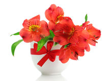 Alstroemeria red flowers in vase Stock Image
