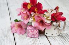 Alstroemeria rosa con il contenitore di regalo Fotografia Stock