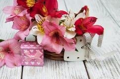 Alstroemeria rosa con il contenitore di regalo Immagine Stock