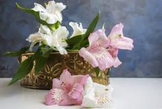 Alstroemeria rosa e bianco Fotografia Stock Libera da Diritti