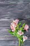 Alstroemeria su fondo rustico Fotografia Stock