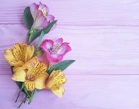 Alstroemeria su un rosa di legno Fotografia Stock Libera da Diritti