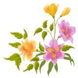 Alstroemeria van de bloem Royalty-vrije Stock Foto's
