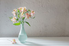 Alstroemeria in vase on  white background Royalty Free Stock Image