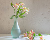 Alstroemeria in vase on  white background Royalty Free Stock Images