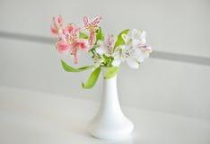 Alstroemeria in vaso La sorgente fiorisce la priorità bassa Fotografie Stock Libere da Diritti