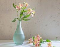 Alstroemeria in vaso su fondo bianco Immagini Stock Libere da Diritti