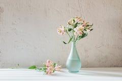 Alstroemeria in vaso sul fondo di bianco di lerciume Fotografie Stock Libere da Diritti