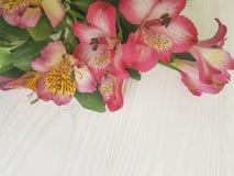 Alstroemeriablume auf einem weißen verzierten hölzernen Hintergrund Stockfotografie