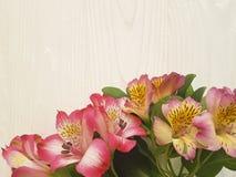 Alstroemeriablume auf einem weißen verzierten hölzernen Hintergrund des Blumenstraußes Lizenzfreie Stockbilder