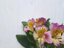 Alstroemeriablume Romance auf einem weißen verzierten hölzernen Hintergrund des Blütenblumenstraußes Lizenzfreie Stockfotos