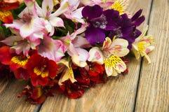 Alstroemeriablumen Stockfotografie
