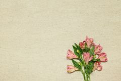 Alstroemerias cor-de-rosa das flores no fundo bege do granito fotos de stock