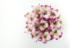 Alstromeria fiorisce in una ciotola di vetro isolata su bianco Fotografie Stock