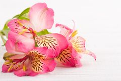Alstromeria flowers on wooden background Stock Images