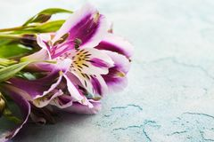 Alstromeria flowers in the wooden box, lit candle Royalty Free Stock Photos