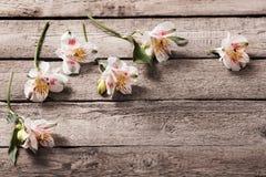 Alstromeria su fondo di legno Fotografia Stock