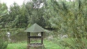 Alt gut durch den Teich Niederlassungen der Weide nahe See stock video footage