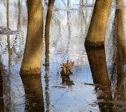 Alta acqua Fotografie Stock
