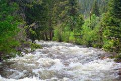 Alta acqua di fiume rapida con gli alberi Fotografia Stock Libera da Diritti