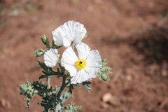 Alta belleza del desierto Imagenes de archivo