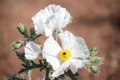 Alta bellezza del deserto Fotografie Stock