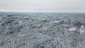 Alta cámara del vuelo que inclina para arriba sobre el bosque grande en el invierno frío almacen de metraje de vídeo