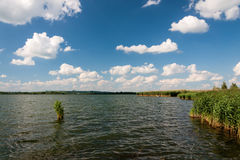Alta canna contro il cielo nuvoloso nel giorno del vento Fotografie Stock