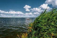 Alta canna contro il cielo nuvoloso nel giorno del vento Fotografia Stock