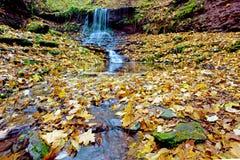 Alta cascata di vista magica sulle rocce in autunno con la l gialla Immagine Stock Libera da Diritti