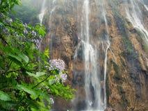 Alta cascata e fiori selvaggi bagnati Fotografia Stock Libera da Diritti