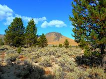 Alta chepa del desierto Fotografía de archivo