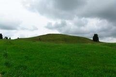 Alta collina invasa con un'erba Fotografia Stock Libera da Diritti