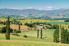Alta collina verde con il fondo della montagna, Nuova Zelanda Fotografia Stock