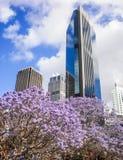 Alta costruzione con gli alberi porpora del fiore Fotografia Stock