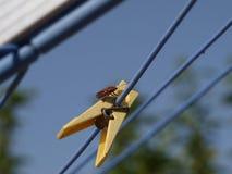 Alta definizione di piccolo insetto sulla linea clip del panno fotografia stock