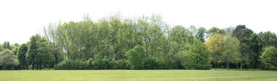 Alta definizione Treeline isolato su un fondo bianco Immagine Stock