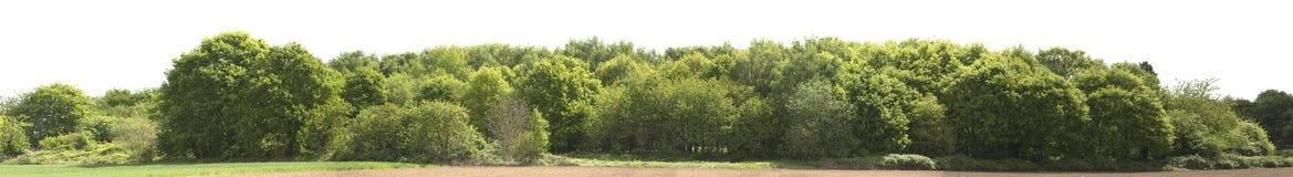 Alta definizione Treeline isolato su un fondo bianco Fotografie Stock