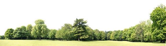 Alta definizione Treeline isolato su un fondo bianco Fotografie Stock Libere da Diritti