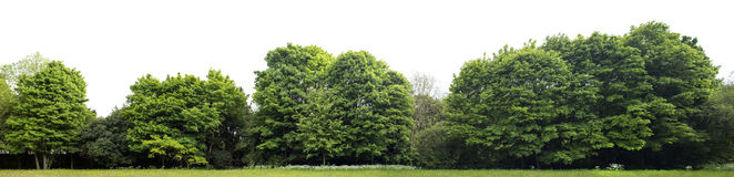 Alta definizione Treeline isolato su un fondo bianco immagini stock libere da diritti