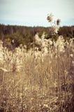 Alta erba asciutta Fotografia Stock Libera da Diritti