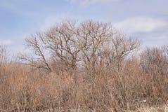 Alta erba asciutta Cielo blu Nubi bianche Fotografia Stock Libera da Diritti