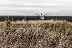 Alta erba asciutta su un campo di estate Fotografie Stock Libere da Diritti