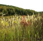 Alta erba con la foresta densa in autunno in anticipo Fotografia Stock