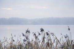 Alta erba con un lago dietro e un paesaggio nebbioso Fotografia Stock