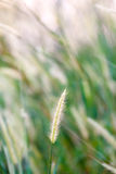 Alta erba della molla di estate sul campo Fotografia Stock Libera da Diritti