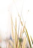 Alta erba della molla di estate sul campo Fotografia Stock
