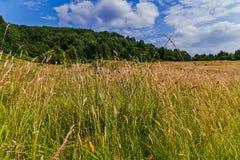 Alta erba densa che cresce in un prato contro un fondo della foresta e del cielo verdi con le nuvole bianche che galleggiano in b Fotografia Stock Libera da Diritti