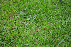 Alta erba dettagliata Fotografie Stock