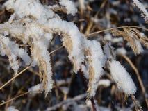 Alta erba meravigliosamente coperta di neve Fotografia Stock Libera da Diritti